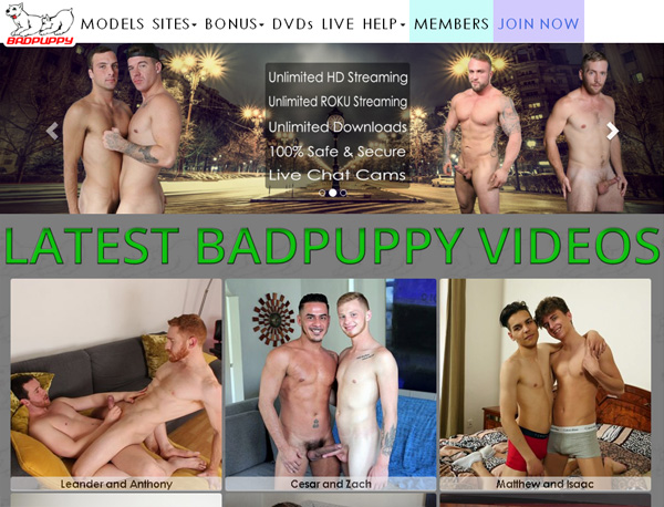 Badpuppy Limited Time Discount